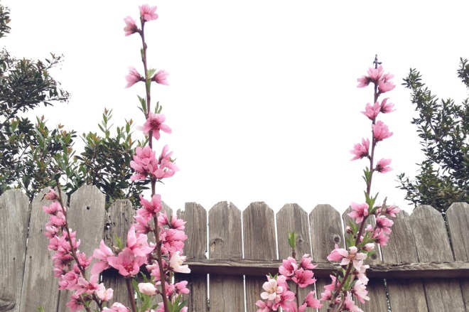 Thoughts on spring and new growth - Permanent Riot - a blog by Katy Regnier