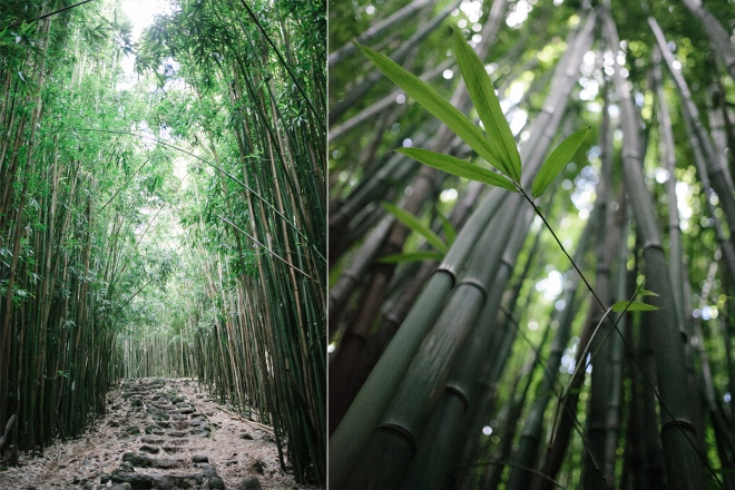 Bamboo forest on the Pipiwai trail in Maui - Permanent Riot blog